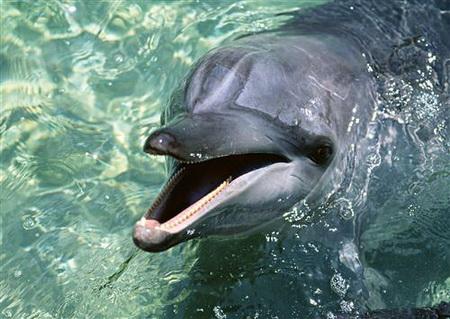 Постер (плакат) Дельфины