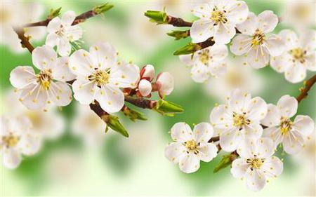 Постер (плакат) Весна