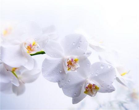 Постер на подрамнике orhidei - орхидеи