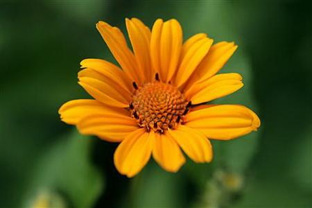 Постер на подрамнике a flower - Цветок