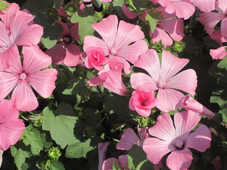Постер на подрамнике garden flower - Садовый цветок