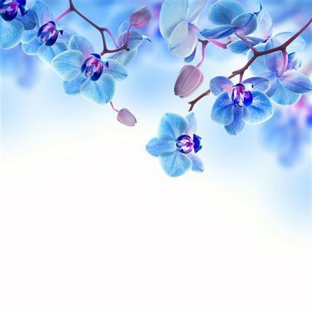 Плакат blue orchid - Синяя Орхидея
