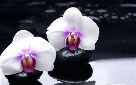 Плакат orhidei - орхидея