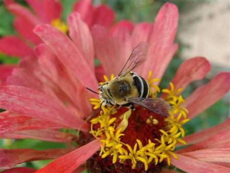 Постер на подрамнике bee - Пчела