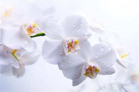 Постер на подрамнике Orchid - Орхидея