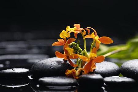 Постер на подрамнике цветы в воде