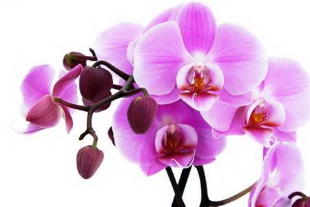 Плакат орхидея