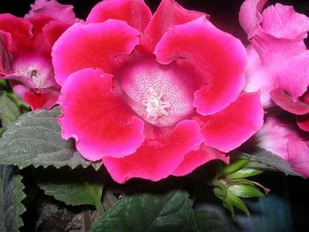 Постер на подрамнике Beautiful red flower - Аленький цветочек