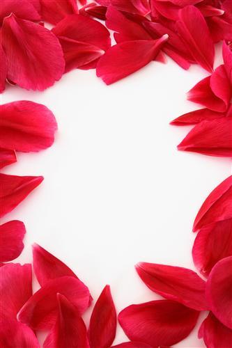 Постер на подрамнике Лепестки роз