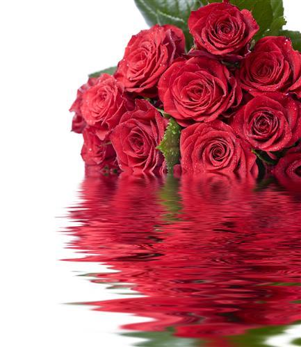 Плакат Розы