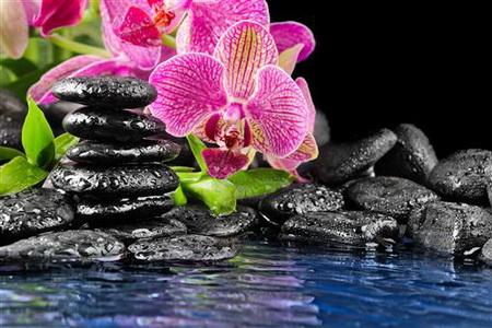 Плакат Орхидеи