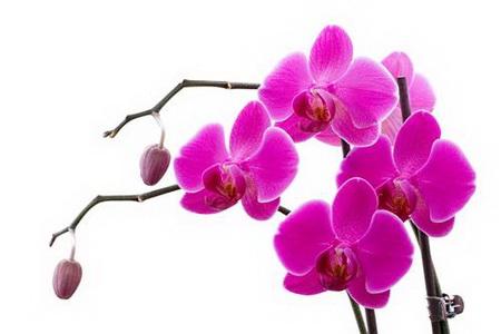 Постер на подрамнике Орхидея