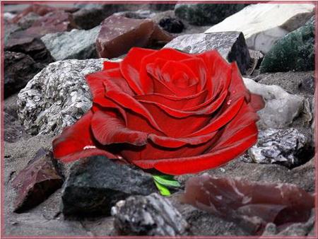 Постер на подрамнике Роза на камнях