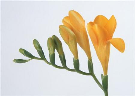 Постер на подрамнике Желтые цветы