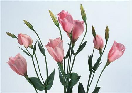 Постер на подрамнике Розовые розочки