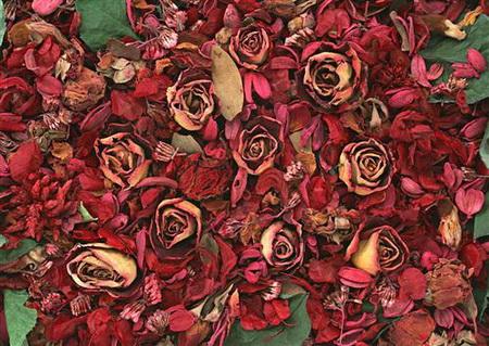 Постер на подрамнике Гербарий из роз