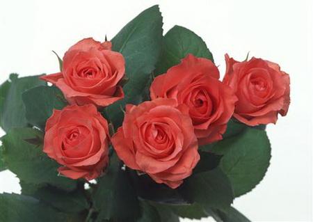 Постер на подрамнике Пять роз