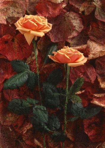 Плакат Пара роз