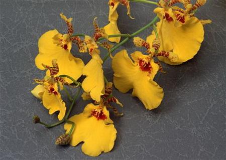 Плакат Веточка желтых орхидей