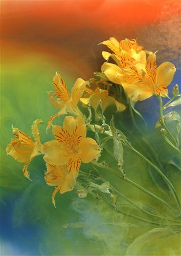 Плакат Желтые цветы