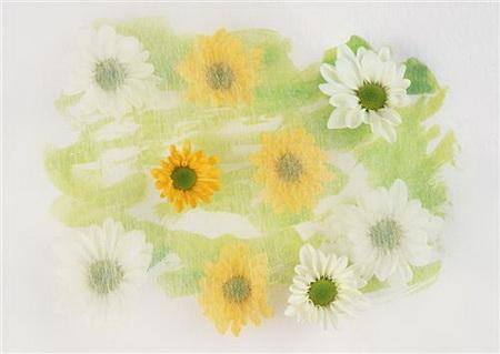 Плакат Желтые и белые цветы