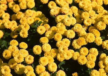 Постер на подрамнике Желтые цветочки