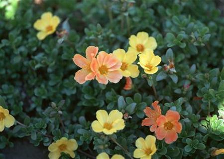 Постер на подрамнике Желтые и оранжевые цветочки