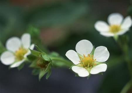 Постер на подрамнике Белые цветы