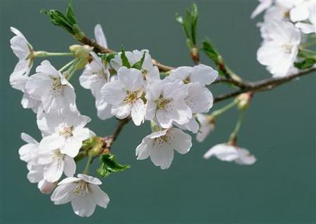 Плакат Весенний цвет