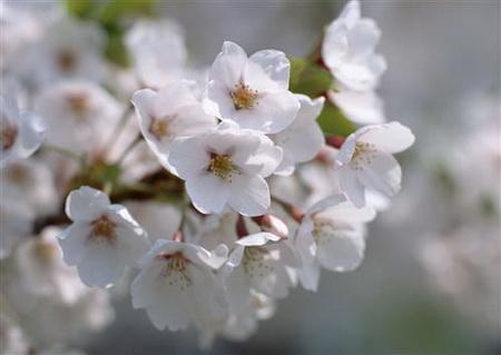 Плакат Цветы на дереве