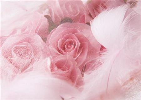 Плакат Розы в перьях