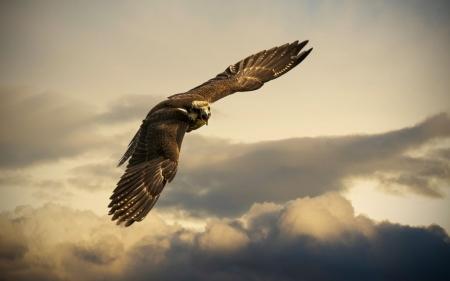 Постер на подрамнике Орел в небе