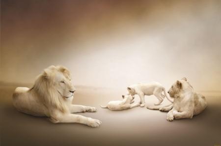 Постер (плакат) Львы
