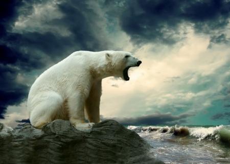Постер (плакат) Белый медведь