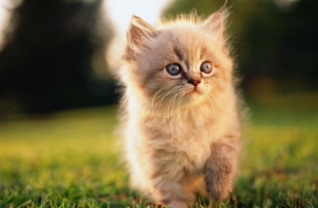 Постер (плакат) Котенок