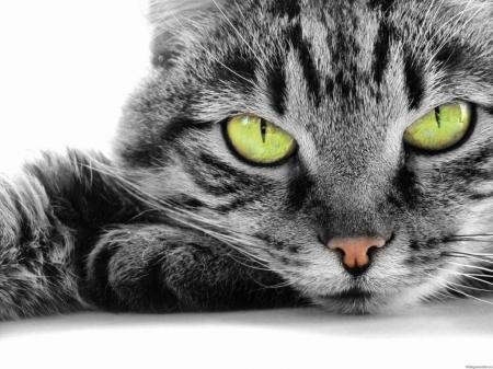 Постер на подрамнике Кот