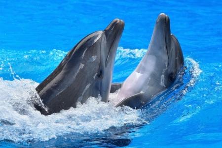 Постер на подрамнике Дельфины
