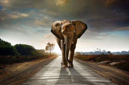 Постер (плакат) Слон