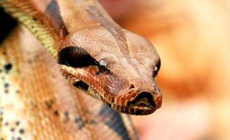 Постер на подрамнике Змея