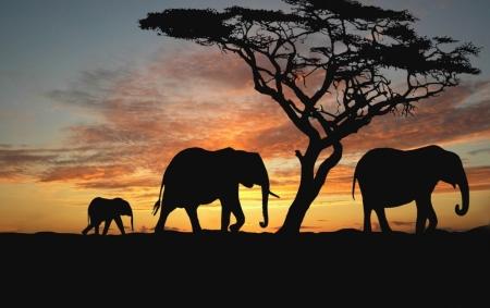 Постер на подрамнике Слоны