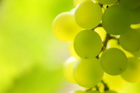 Плакат Желтый виноград