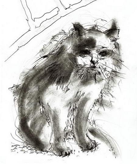 Постер на подрамнике Кот черным карандашом
