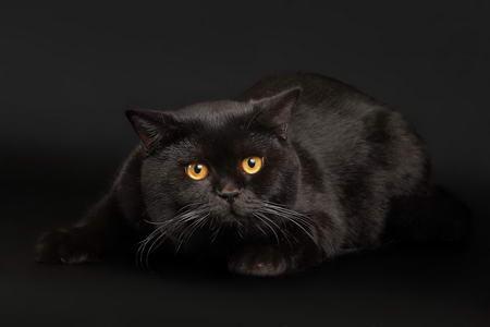 Постер на подрамнике Кот чернее ночи