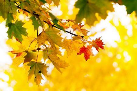 Постер на подрамнике Осенние листья