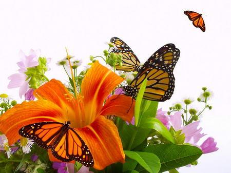 Плакат Бабочки на цветке