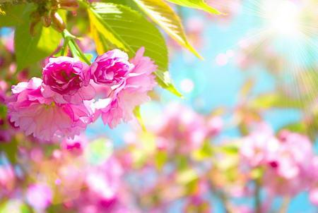 Постер на подрамнике Розовые цветы и солнце