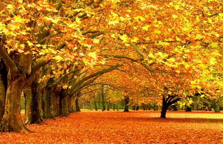 Постер на подрамнике Золотые листья