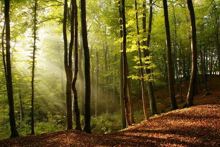 Постер на подрамнике Лучи в лесу