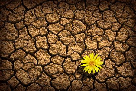 Постер на подрамнике Цветок в пустыне