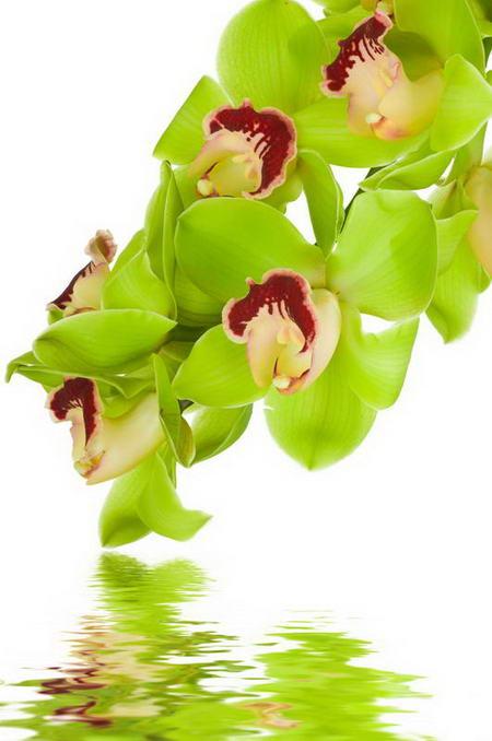 Постер на подрамнике Орхидеи над водой